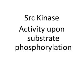 Src  Kinase Activity upon substrate  phosphorylation
