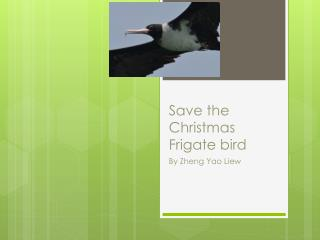 Save the Christmas Frigate bird