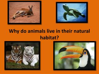 Why do animals live in their natural habitat?