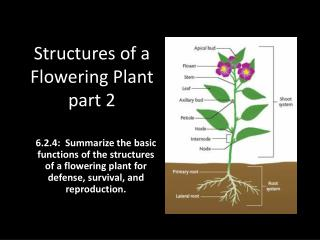 Structures of a Flowering Plant part 2