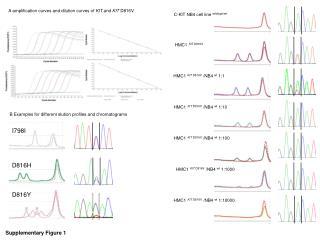 C-KIT NB4  cell line wildtype / wt