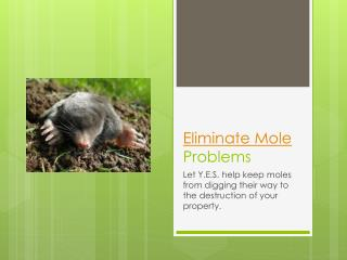 Eliminate Mole Problems – Let Y.E.S. help keep moles from di
