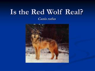 Is the Red Wolf Real Canis rufus