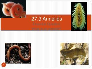 27.3 Annelids