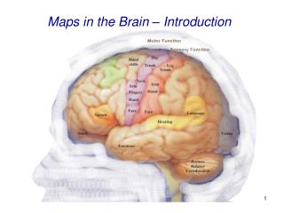 Maps in the Brain � Introduction