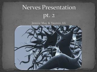 Nerves Presentation pt. 2