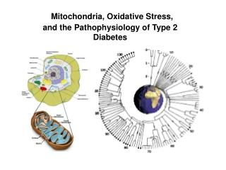 Mitochondria, Oxidative Stress, and the Pathophysiology of Type 2 Diabetes