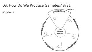 LG: How Do We Produce Gametes? 3/31