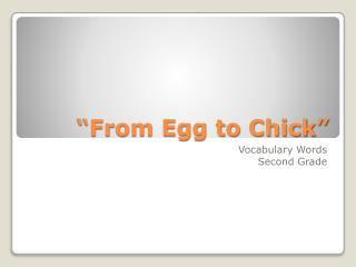 """From Egg to Chick"""