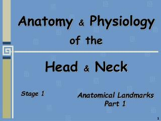 Anatomy  &  Physiology of the  Head  &  Neck
