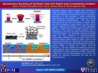 Spontaneous Buckling of Synthetic Gels with Depth-wise Crosslinking Gradient