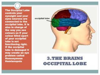 3.THE BRAINS OCCIPITAL LOBE
