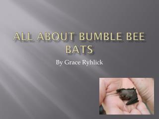 All about bumble bee bats
