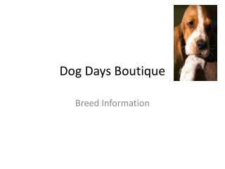 Dog  Days Boutique