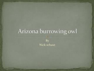Arizona burrowing owl