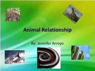 Animal Relationship
