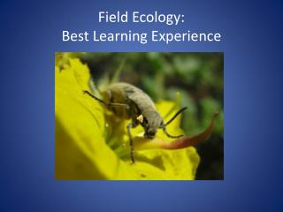 Field Ecology:  Best Learning Experience