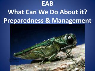EAB  What Can We Do About it? Preparedness & Management