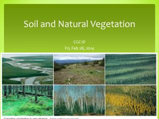 Soil and  Natural Vegetation