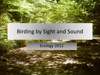 Birding by Sight and Sound