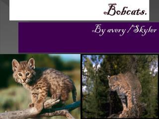 Bobcats.
