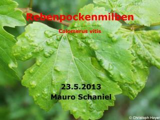 Rebenpockenmilben Colomerus vitis