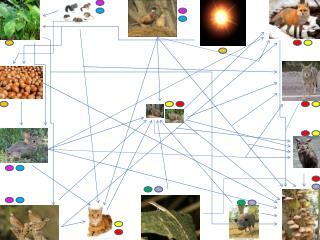 The Bobcats food web 002