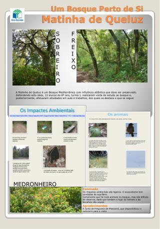 Um Bosque Perto de Si  Matinha de Queluz
