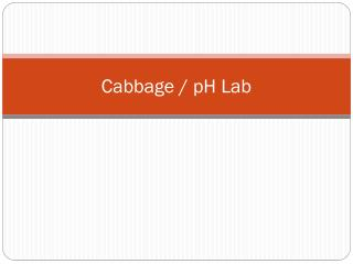 Cabbage / pH Lab