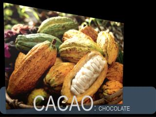 CACAO :  cHOCOLATE