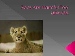 Zoos Are Harmful Too animals