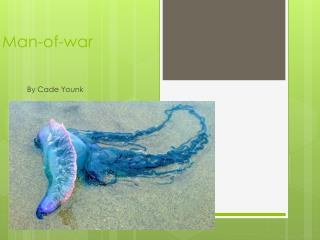 Man-of-war