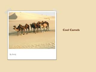 Cool Camels