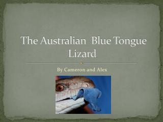 The Australian  Blue Tongue Lizard