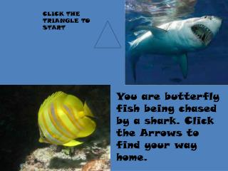 You are butterfly fish being chased by a shark. Click the Arrows to find your way home.