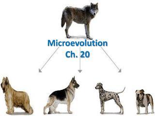 Microevolution Ch. 20