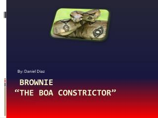 """brownie                           """"the boa  constrictor"""""""