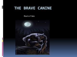 The Brave Canine