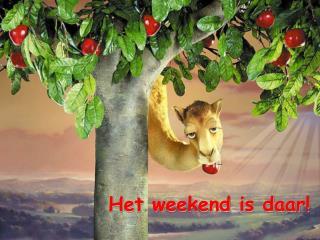 Het weekend is daar