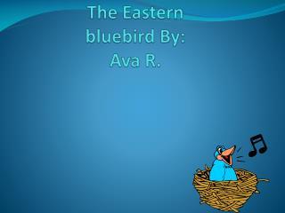 T he Eastern bluebird By: Ava R.