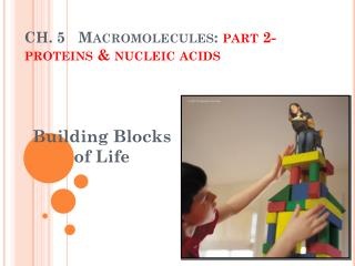 CH. 5   Macromolecules:  part 2-proteins & nucleic acids