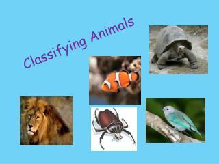 Classifying Animals