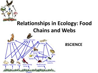 Relationships in Ecology: Food Chains and Webs
