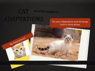 CAT ADAPTATIONS