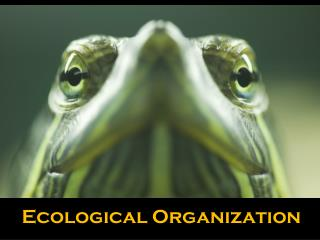 Ecological  Organization
