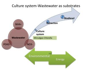 Culture system-Wastewater as substrates