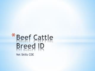 Beef Cattle  Breed ID