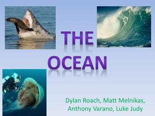 Dylan Roach, Matt  Melnikas , Anthony  Varano , Luke Judy