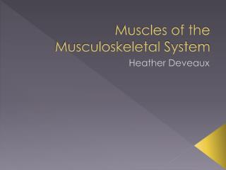 Muscles of the Musculoskeletal System