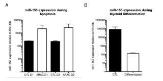 miR-155 expression during                 Apoptosis